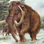 On va dégraisser le mammouth !! Au tour des profs…
