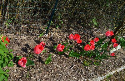 Belles fleurs printanières