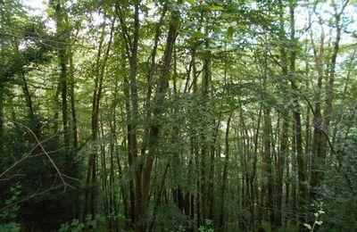 Une marche dans le Bois Boissel