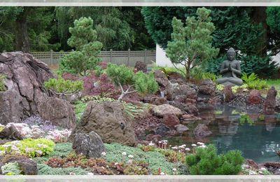 Une façon économique d'avoir des niwaki dans son jardin.