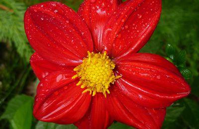 Rouge de l' automne ... Pour Khanel