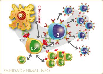 Una clara conexión entre la presencia de citocinas proinflamatorias y la fatiga centra