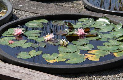 Wasser wirkt Wunder - Tag der offenen Tür der LWG am 2. Juli