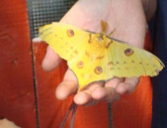 ELNE : Le tropique du papillon (66)
