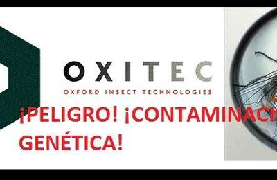 Alerta Roja: La empresa británica Oxitec pretende liberar casi dos millones de moscas modificadas genéticamente cerca de la ciudad de Tarragona