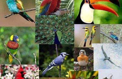 Bourse aux oiseaux 6 mars 2016 à Chatillon sur Loire