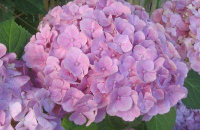 Mes Photos: Fleurs de mon petit jardinet (suite )