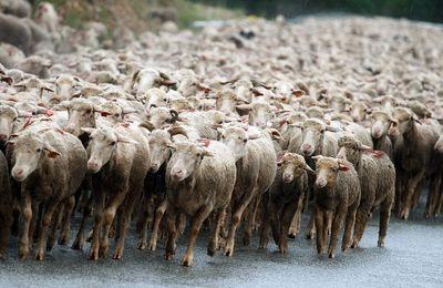 -Gustave Le Bon: Comment démystifier la psychologie des foules ?-