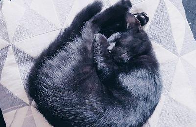Stop aux puces et aux tiques sur mon chat avec Frontline