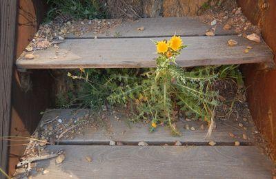 Escalier de la calanque des Moines