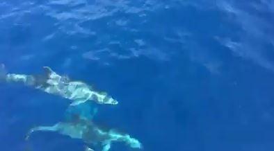 Dauphins bleus et blancs du 27 juin 2017