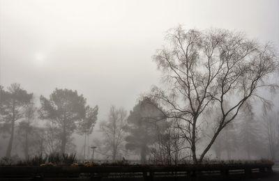 Ambiance ouatée ce matin à Kermoysan