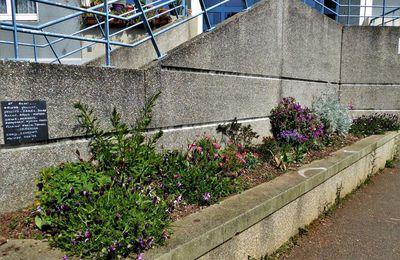 Un an plus tard, les fleurs des enfants rue d'Irlande sont en pleine forme