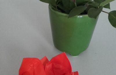 Origami : nénuphar