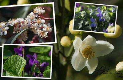 Petites fleurs du jardin