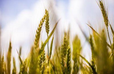 CRISE AGRICOLE  « Plan social » silencieux : des milliers d'agriculteurs abandonnent chaque année leur métier