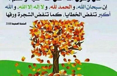 Dire SubhânAllah wa Al Hamdulillah wa Laa ilâha illa Allah wa Allahu Akbar fait tomber les péchés!