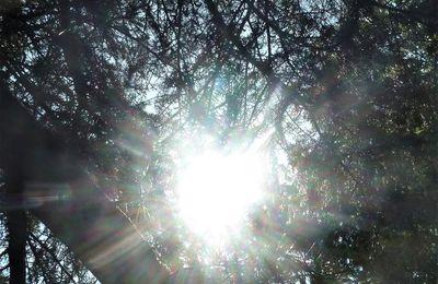 Le coeur de la lumière
