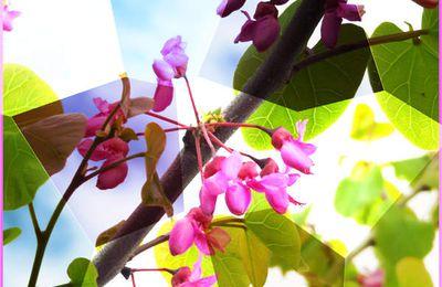 Feuilles et fleurs