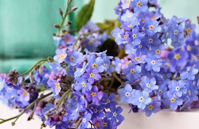Forget me not....