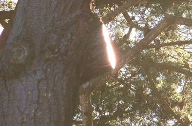 Lumière dans l'arbre
