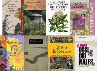 Plantes sauvages
