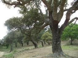 Forêt et traitement des déchets : pour des filières varoises d'excellence.