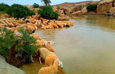 Splendides photos de hadj Tayeb BRICHI dans la région de BAKTACHE ( Sidi-Makhlouf)