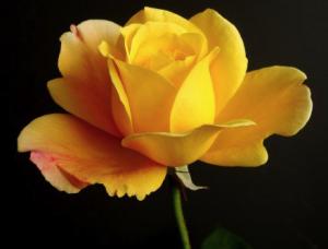 BONJOUR LES AMIS - ( 6) / Bon Anniversaire à mon Ami MSL-