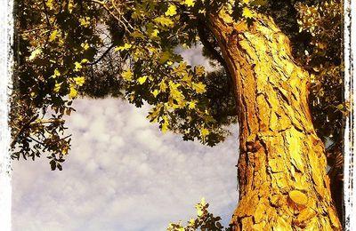 Les prodiges des forêts par  Peter Wohlleben : La Vie secrète des arbres.