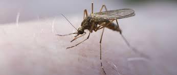 Paludisme : recommandations par pays 2015