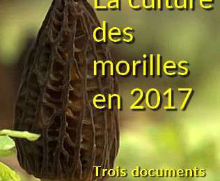 LA CULTURE DES MORILLES EN 2017 - Trois documents pour faire le point
