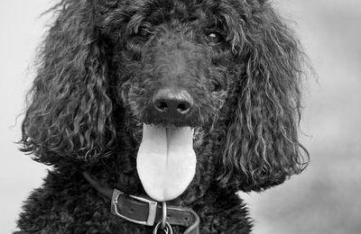 NODIER, Charles, Histoire du chien de Brisquet