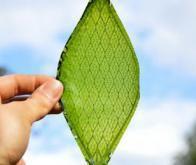 Le futur de l'énergie passera par la photosythèse artificielle