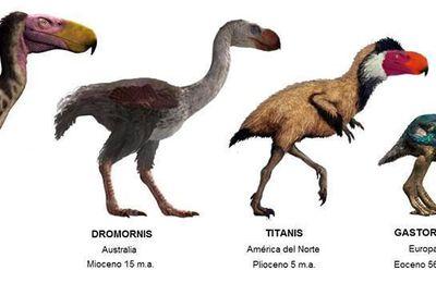Les oiseaux cénozoïques, il valait mieux ne pas les croiser sur son chemin…