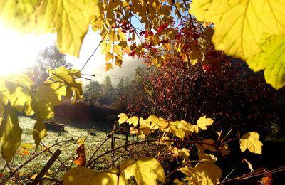 Autour de Turquestein-Blancrupt en automne