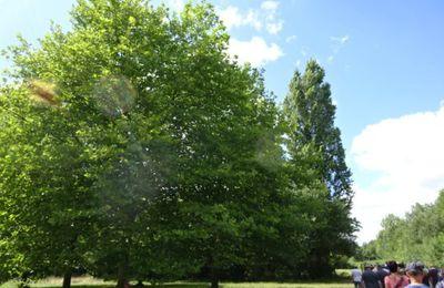 Rochefort sur Loire, St Offange, St Symphorien à l'épreuve du temps