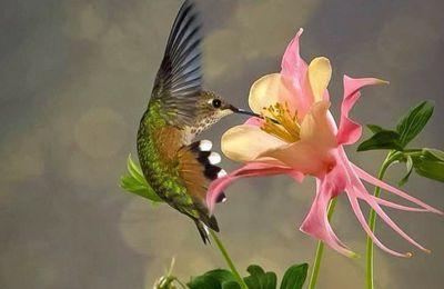 Je fais ma part, comme le colibri...