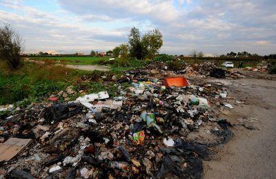 Contre l'explosion de la criminalité environnementale, la lutte s'organise