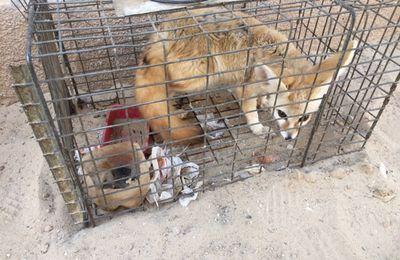 Le respect des espèces animales protégées, une autre facette du développement durable d'une société...(Témoignage)