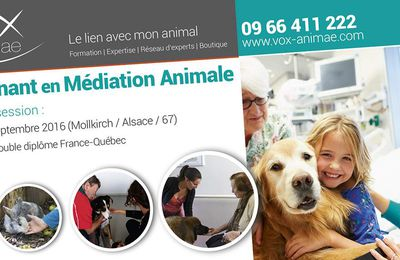 Formation d'Intervenant en Médiation Animale