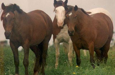 Le cheval d'Abaco a disparu