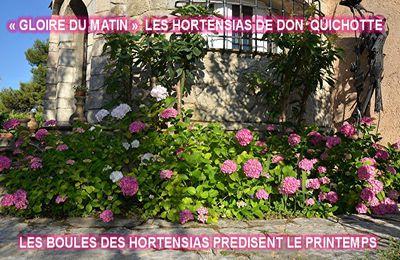 LES FLEURS DE MON JARDIN(2)
