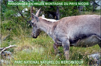 LES INTRIGANTES VALLEES DU MERCANTOUR (1)
