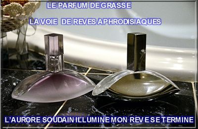 HOLD UP SUR LE PARFUM DE GRASSE BY SOSO