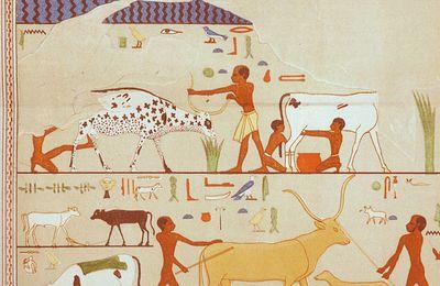 L'ÉGYPTOLOGIE TCHÈQUE : III. LES FOUILLES D' ABOUSIR DURANT LA DERNIÈRE DÉCENNIE DU XXème SIÈCLE - 6. LA TOMBE DE FETEKTI : LES DIFFÉRENTES PARTIES DE LA SCÈNE DE MARCHÉ