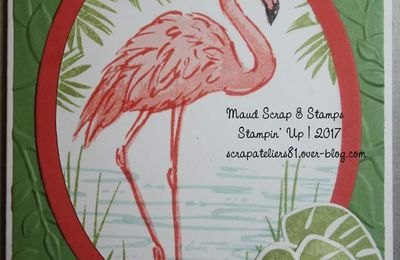 carte Flamant rose au zoo