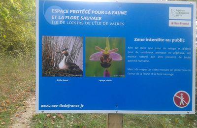 Espace protégé pour la Faune et la Flore sauvage à Vaires