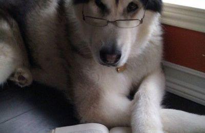 Pourquoi n'as-tu pas étudié ?