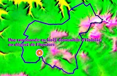 Une grande randonnée en forêt domaniale d'Halatte au départ de Fleurines